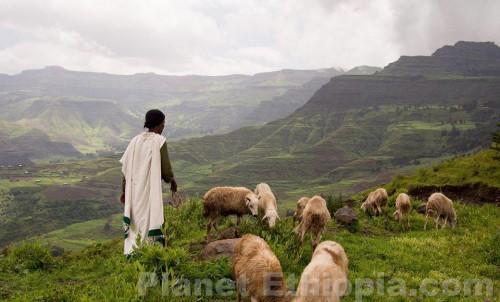 EthiopianShepherdandSheep1.jpg
