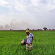 Ethiopia body suspends farm lease programme after poor results
