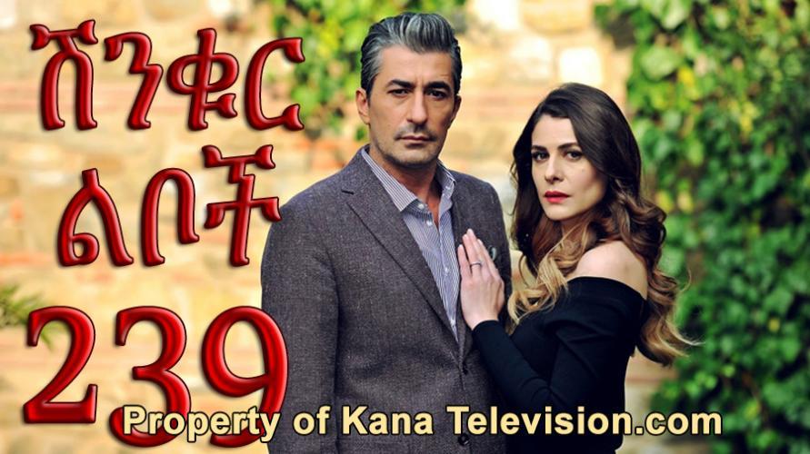 Shinkur Liboch - Part 239  (ሽንቁር ልቦች) Kana TV Drama
