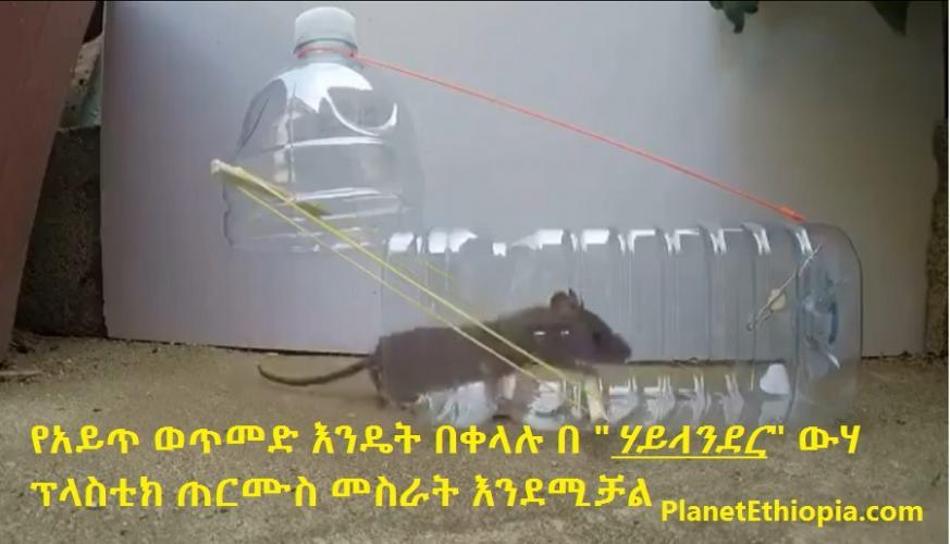 "Mouse Trap With a ""Highlander"" Water Bottle - የአይጥ ወጥመድ እንዴት በቀላሉ በ ""ሃይላንደር"" ውሃ ፕላስቲክ ጠርሙስ መስራት እንደሚ"