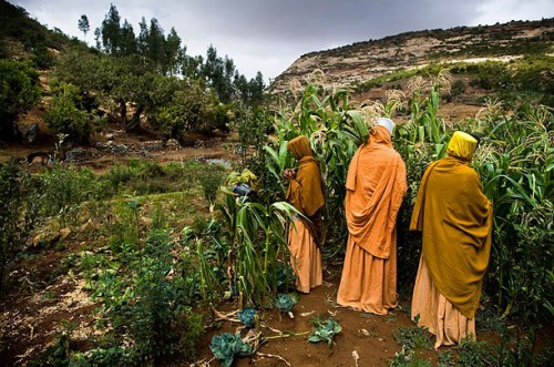Three nuns tend to a vegetable garden near the Mary Andinet Monastery in Tigray, where the land-regeneration process has been successful, in large part because farmers are not permitted to disturb the plant life that inhabits religious sites.