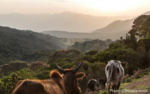 HarenaForestEthiopia0.jpg